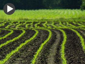 Wyckoff's Weekly Update: US Corn Planting Strong, but Weather Looms in Forecast