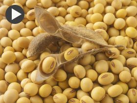 Wyckoff's Weekly Grain Forecast: Critical Week for Soybean Market