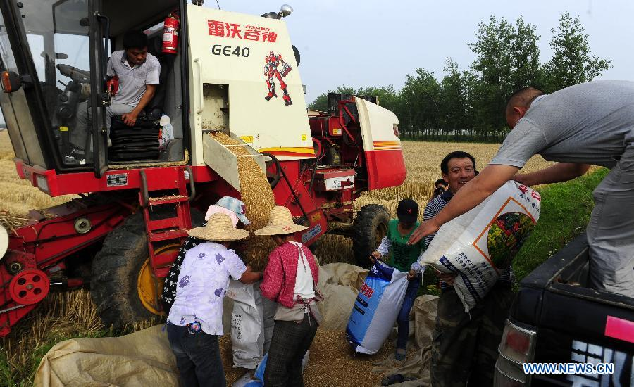 Collecting Wheat in China