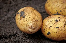 Is Promotion the Key to Potato Producer Fortunes?