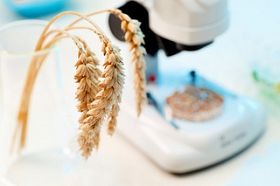 Is It Time the UK Embraced GM Crops?