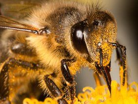 US Bee Population Showing Less Die-Off Than in 2014