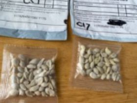 Caution urged in US after mystery seed mailings