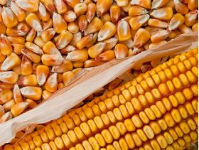 Wyckoff's Closing Grains: Corn Futures Closed Down Tuesday