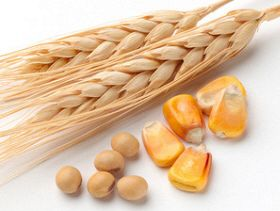 USDA Reports Hammer Grain Futures Prices Lower