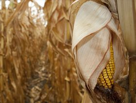Grain Hedge: After Rally, Grains Meet Technical Resistance
