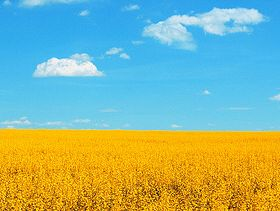Harper Government Secures Additional Capacity for Export of Canola to China