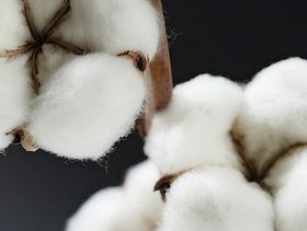 Cotton Incorporated: US Macro Indicators & the Cotton Supply Chain