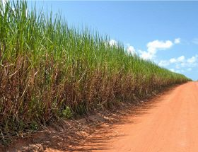 India's Sugar Output Up 19 Per Cent
