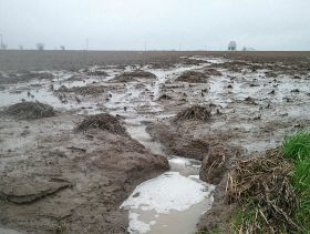 Replant Options: Forage, Cover Crop Considerations for Flooded Sites