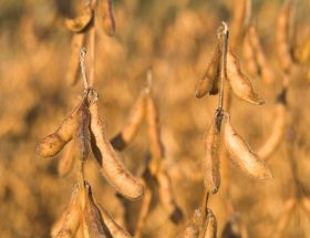 Soy Buyers Prefer Predictability of US Shipments