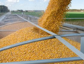 Wyckoff's Closing Grains: Corn, Beans Lower on Thursday