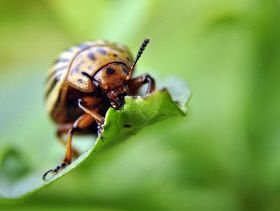 Global Food Security at Risk from Spreading Crop Pests