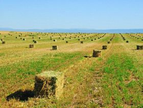 Grain & Hay Report: International Wheat Prices Down