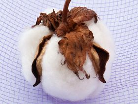 Cotton Incorporated: Market Fundamentals and Price Outlook