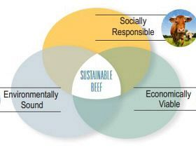 Global Roundtable for Sustainable Beef Invites Public Comment on Draft Principles & Criteria