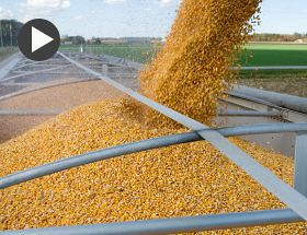 Video: How is Dry Weather Affecting Crop Production Across China, Russia and Ukraine?