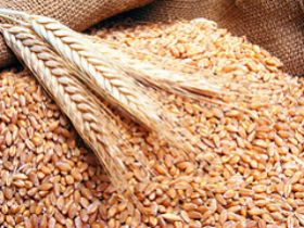 30 Per Cent of World's Corn, Rice, Wheat Crop Land 'Maxed Out'