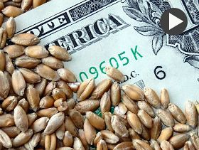 Market Analyst: Grains Find Support Towards End of Week
