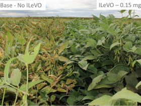 EPA Approves First Seed Treatment to Protect Against Soybean Sudden Death Syndrome, Nematodes